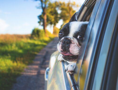 Tips til at have hunden med i bilen